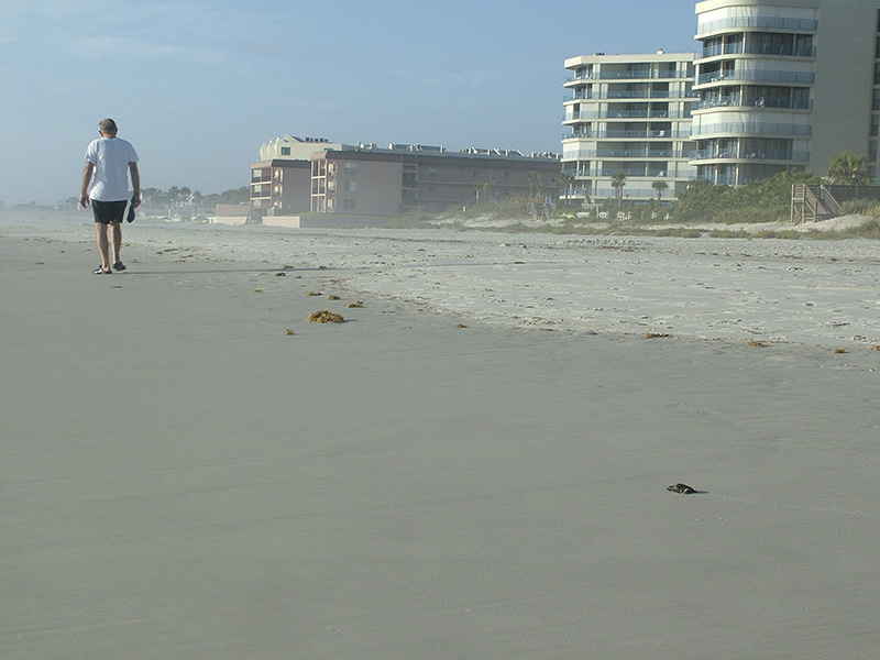 Tim Kovar, Florida Turtles #1