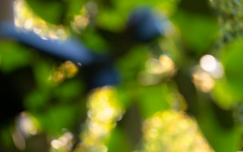 Abstract colour photograph
